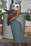 Saw weth Owl