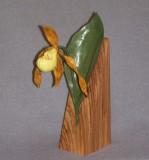 Yellow Lady Slipper